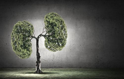 养肺的食物品种多 健肺或许更有效