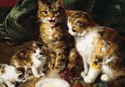 家里有孩子想养猫,孩子和猫咪怎么正确相处