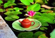 夏天常喝荷叶茶不节食也能轻松瘦