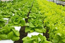 无菌LED人工光照种植蔬菜兴起营养够吗?