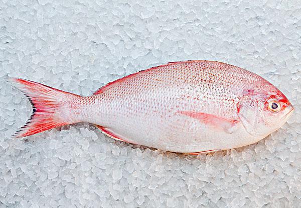 孕妇吃什么鱼好 补充鱼油注意事项