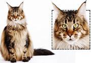 怎么给猫咪看相 脸型看出3个性