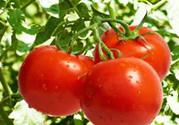 吃番茄有什么好处?吃番茄能减肥吗