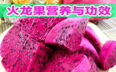 火龙果的热量有多高呢 火龙果有什么价值呢