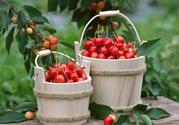樱桃可以放冰箱保鲜吗?樱桃能放冰箱保存多久?