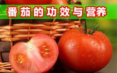 月经期可以喝番茄汁吗 番茄汁的作用