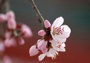 春分时养生要注意什么?春分要预防哪些疾病?