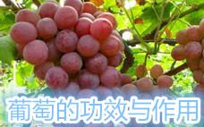 葡萄干不洗能直接吃吗 葡萄干不洗可以吗