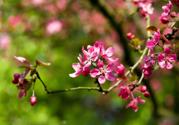 什么花可以净化空气?什么花可以减肥?