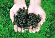 地皮菜是发物吗?地皮菜的功效与禁忌