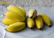 牛奶蕉可以减肥吗?牛奶蕉怎么吃减肥