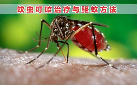 无极膏治蚊虫叮咬吗?蚊虫叮咬用无极膏有效吗?