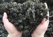 地皮菜可以和冬瓜一起吃吗?地皮菜能和冬瓜同吃吗?