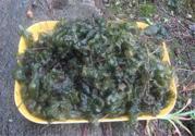 地皮菜可以和蘑菇一起吃吗?地皮菜能和蘑菇同吃吗?