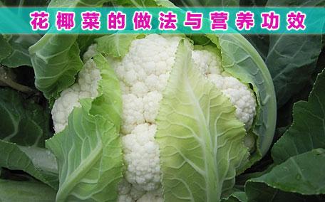 花椰菜和青花菜的区别 二者不一样