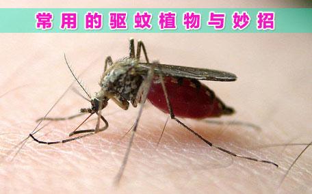 花露水可以驱蚊子吗 花露水有什么功效
