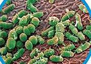 带状疱疹怎么办?带状疱疹偏方