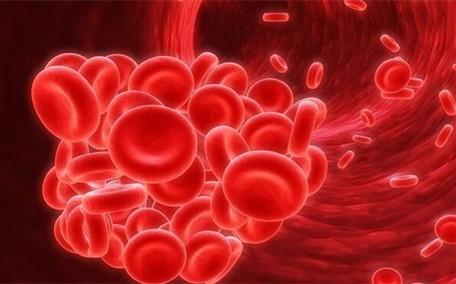 补血一天吃什么最好 正确搭配补血食物