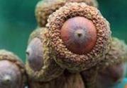 壮阳果多少钱一斤?壮阳果真的有效果吗?