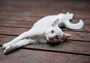 猫咪不高兴的表现有哪些?主人应该怎么办