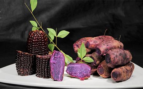 紫薯发芽了还能吃吗 紫薯如何看出是否坏了