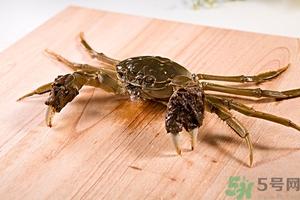 螃蟹怎么保存才新鲜?活螃蟹怎么保存过夜? 螃蟹能放多久不死?