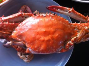 梭子蟹什么时候最肥?梭子蟹什么时候最好吃?