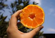 吃维生素c可以美白吗?什么时候吃维生素c最好?