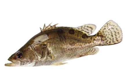怎样吃鱼最有营养?喝鱼汤会致高脂血症吗?
