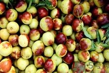 吃冬枣的益处有哪些 吃冬枣有副感化吗