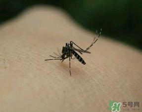 冬天有蚊子吗?为什么冬天还有蚊子?