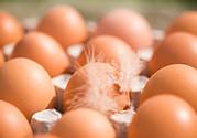 痛风能吃毛蛋吗?痛风吃毛蛋好吗