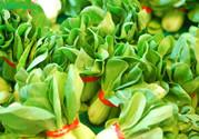 小白菜的根可以吃吗?小白菜根的功效与作用