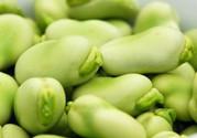 蚕豆可以打豆浆吗?怎么打豆浆呢