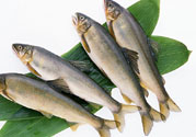 咽喉炎可以吃鱼吗?咽喉炎吃鱼有什么好处?