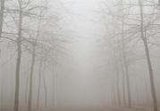 雾霾天吃什么菜清肺?雾霾天白色食物