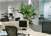 办公桌上放什么植物好?办公桌摆放什么吉利?