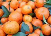 冰糖橘怎么保存?冰糖橘的储存方法