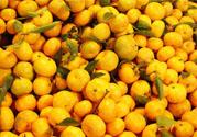 冰糖橘热量高吗?吃冰糖橘会发胖吗?