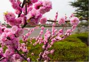 春天养生吃什么粥好?春季养生粥品有哪些?