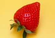 小孩多吃草莓好吗?小孩可以摘草莓吗?