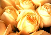 情人节可以送黄玫瑰吗?情人节送黄玫瑰好吗?