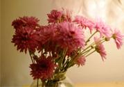 鲜花怎么养?鲜花怎么养放的比较久?