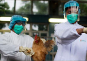 h7n9禽流感可以治愈吗?禽流感能治好吗?