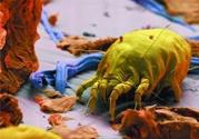 消毒液能杀死螨虫吗?84消毒液能杀死螨虫吗?