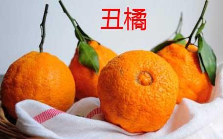 丑柑是哪里产的 丑柑在四川的什么地方