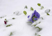 倒春寒如何养生?倒春寒养生需注意五点