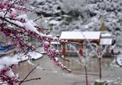 倒春寒是一种什么冷?倒春寒为什么会冷?