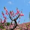 春天为什么会突然降温?春天为什么会突然变冷?