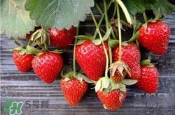 寶寶吃草莓大便黑色嗎
